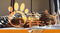 夕暮れととら猫。の日 - 猫と暮らす とら猫JOYのもふもふ日記 - The SKY - Timelapse. :: 猫と暮らす(ΦωΦ)
