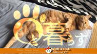 のど撫でゴロゴロ。な日 - 猫と暮らす とら猫JOYのもふもふ日記 - The SKY - Timelapse. :: 猫と暮らす(ΦωΦ)