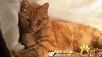 ひのき 猫 かわいいにゃ。思春期な日 - 猫と暮らす とら猫JOYのもふもふ日記 - The SKY - Timelapse. :: 猫と暮らす(ΦωΦ)