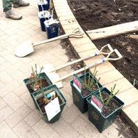 2018年2月の月例会「植え付け」駒場野公園拡張スペース - 駒 場 バ ラ 会 咲く 咲く 日 誌