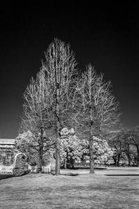 2018年2月12日 季節感のある樹とない樹 - Silver Oblivion