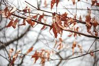 玉川上水・久しぶりに散歩写真 2018年2月11日 - 暗 箱 夜 話 【弐 號】