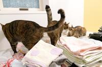 お風呂にお邪魔軍団 - 猫と夕焼け