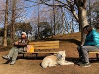 辛くは無かった・・・ - 秋田犬「大和と飛鳥丸」の日々Ⅱ
