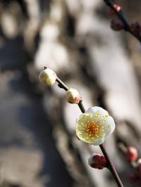 千葉市都市緑化植物園に寄ってみた - いや、だから 姉ちゃん じゃなくて ネイチャー・・・