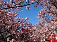 春もすぐそばにさらの木2018年2月 - ずっとそばに