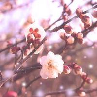 ポエムイヤーらしい「梅花の歌」そしてわたし独自の解釈 - poem  art. ***ココロの景色***