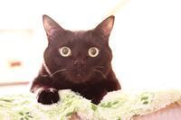 黒猫の特徴 - きょうだい猫と仲良し暮らし