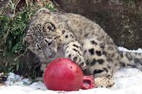 「フク」とボールと麻袋 - 動物園放浪記