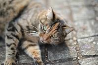 まゝに/2月の散策公園猫と梅 - Maruの/ まゝに