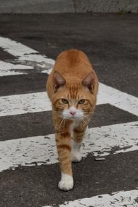 ネコ - こんなものを見た2