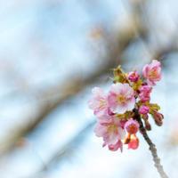 春待ち~三浦にて~ - 気の向くままに…