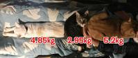 体重測定(2018年2月)〜ファミ吉ちゃんと大きくなってるよ^^〜 - NEKO LOG 別館「パーマン猫と申します」