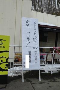 祝・コキンちゃんお名前決定\(^-^)/ - レッサーパンダ☆もふてく放浪記