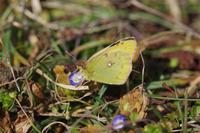 今年もモンキでシーズン始動 - 蝶と蜻蛉の撮影日記