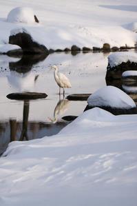 雪の公園で白鷺 - In My Life