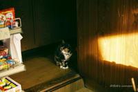 看板ネコ - BobのCamera