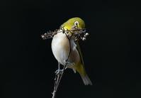 木の実とメジロさん - ベジタブルpartⅤ(鳥と共に日々是好日)