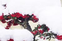 雪、積もりました - kogomiの気ままな一コマ