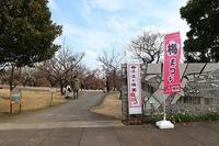 小田原フラワーガーデンの梅まつり - つれづれ日記