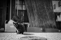 今井町の猫 - Seven's Photostream