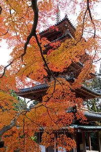 京都の紅葉2017 海住山寺の彩り(木津川市) - 花景色-K.W.C. PhotoBlog