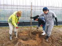 熊本ぶどう社方園定植、移植の様子と熊本農業高校の実習生の頑張りその1(苗を掘り起こすまで) - FLCパートナーズストア