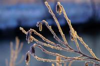 厳冬の朝 - デジタルで見ていた風景
