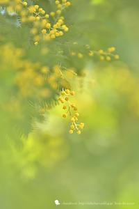 春色のくつ - お花びより