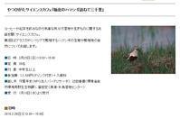 ★谷津干潟自然観察センターでハマシギのお話(2月25日) - 葛西臨海公園・鳥類園Ⅱ