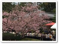 観桜の茶会@二条城 - カナディアンロッキーで暮らす