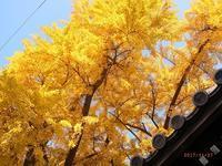 難宗寺の銀杏 - Day by  day