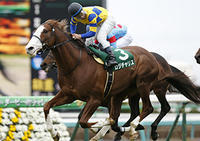 今週の重賞レース出走馬! - ホースバーエルコン HORSE BAR ELCON