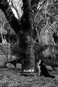 ジャンプ - GOOD LUCK!