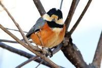 研究林の小鳥たち - 今日の鳥さんⅡ