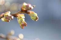 春よ来い - ecocoro日和