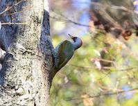 今日の探鳥は、、 - ぶらり探鳥