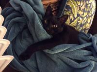 ネコ : ぬくぬく - にゃんこと暮らす・アメリカ・アパート(その2)