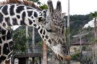 大型草食動物に餌やり - 動物園放浪記
