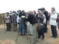 【第10回霞ヶ浦自然観察会「霞ヶ浦の冬の鳥たち~湖と湿原の冬の風景」を実施しました】 - ぴゅあちゃんの部屋