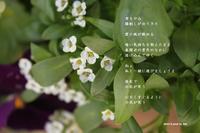 くすぐるように - 花の咲み、花のうた、きらめく地上 ―― photo&poem gallery kanon