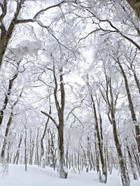 雪の大万木山リベンジ③ - 清治の花便り