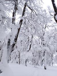 雪の大万木山リベンジ④・最終回 - 清治の花便り