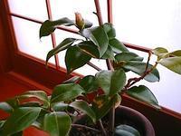 604、植物の知性:2冊の本(1)植物はそこまで知っている - 五十嵐靖之 趣味の写真と短歌