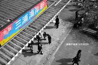 見頃ではないのにぃ〜『三浦海岸桜まつり2018』③ - 写愛館