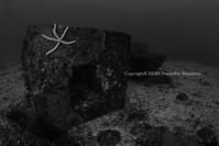 ブロック - Diving Life ~Aita pe'a pe'a~