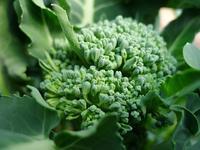 冬の野菜や果物 (Orto) - エミリアからの便り