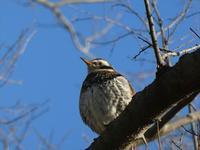 Bird watching hike. Asaba Biotope, Akigase park, and Sakuraso park. - Hike in and around Tokyo
