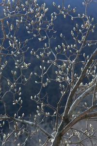 春の芽吹き    - 風の彩り-2