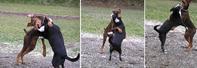 遊ぶ犬 - hibariの巣